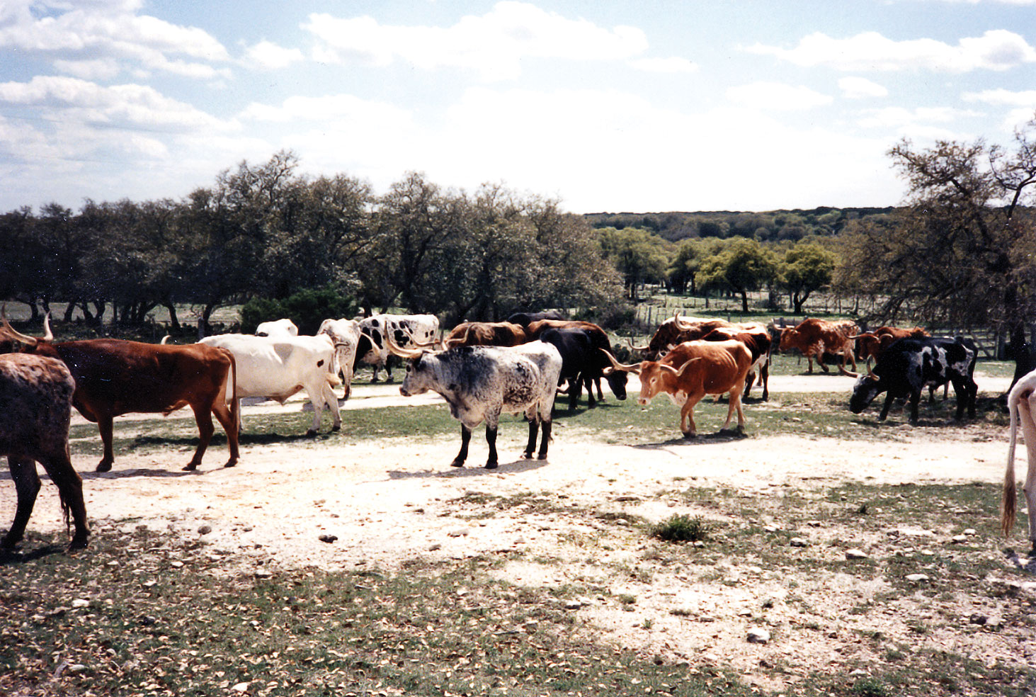 Texas: the ranch, the history, the food