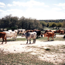 The ranch's permanent guests offer Texas-style hospitality