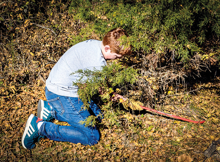 Gavin Ice, Ron's grandson, cuts down the chosen tree for Christmas. This is what holiday photography should be.
